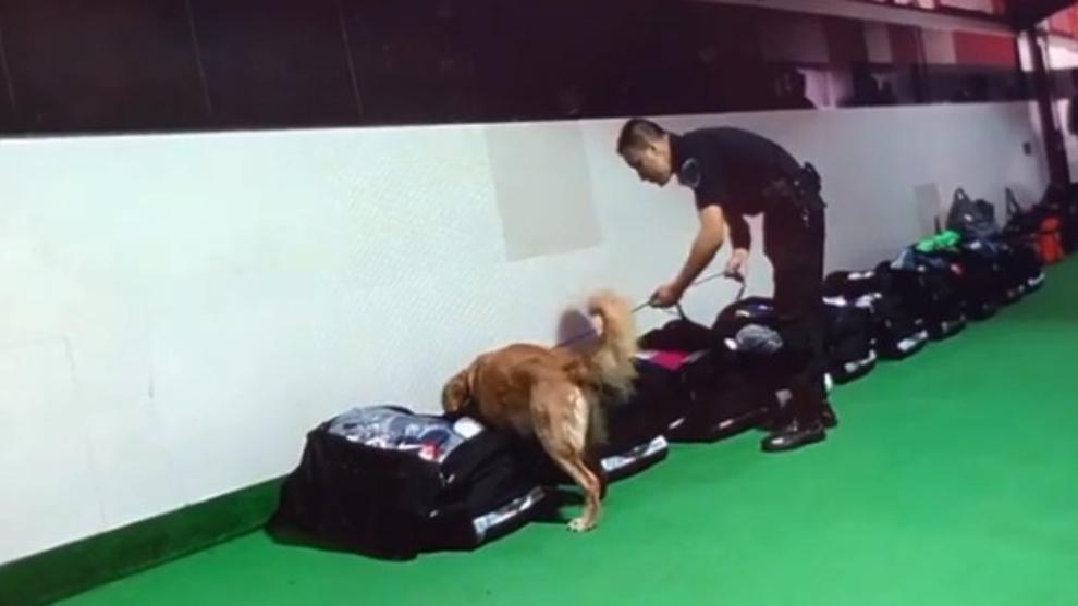 Los perros de la policía revisando los bolsos de Boca en el...