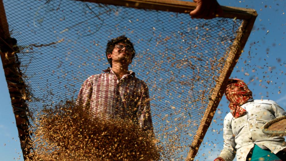 16 de octubre, Día Mundial de la Alimentación: ¿cuál es su...