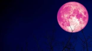 Luna de Fresa: cómo y cuándo verla desde Argentina